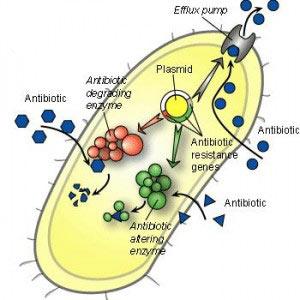 Http://acces.ens-lyon.fr/acces/ressources/sante/reponse-immunitaire
