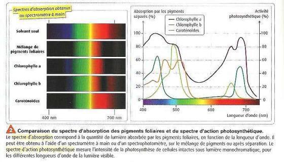 Pourquoi il y a au soleil des taches de pigment